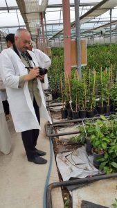 В питомнике цитрусовых